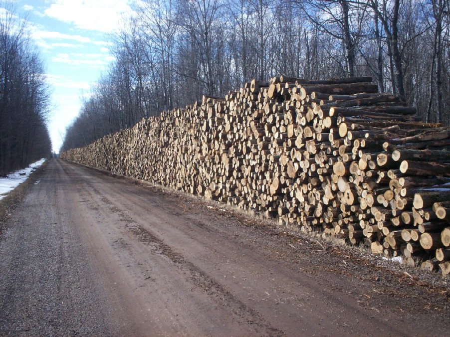 Timber sales price county wi official website for Cordwood house cost